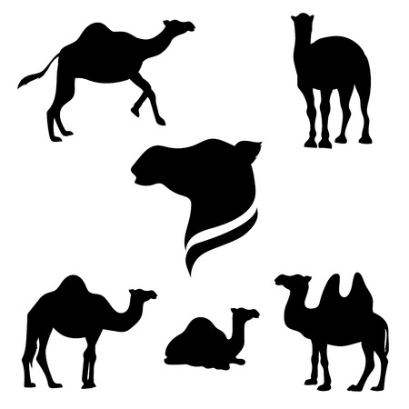 Camel set of black silhouettes. Icons and illustrations of animals. Wild animals pattern.