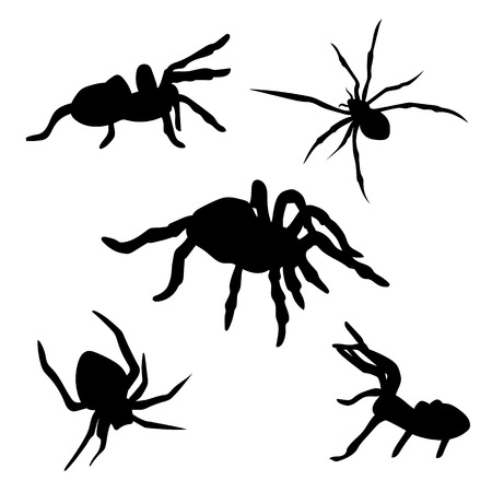 animals in the wild: Spider set of black silhouettes. Icons and illustrations of animals. Wild animals pattern. Illustration