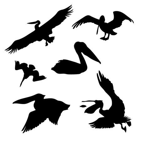 Pelican set van zwarte silhouetten. Pictogrammen en illustraties van dieren. Wilde dieren patroon.
