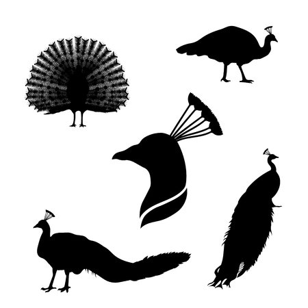 Peacock set of black silhouettes. Icons and illustrations of animals. Wild animals pattern. Ilustração
