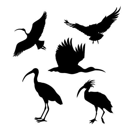Ibis pictogrammen en silhouetten. Set van illustraties in verschillende poses.