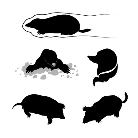 Mole icons and silhouettes. Set of illustrations in different poses. Stock Illustratie