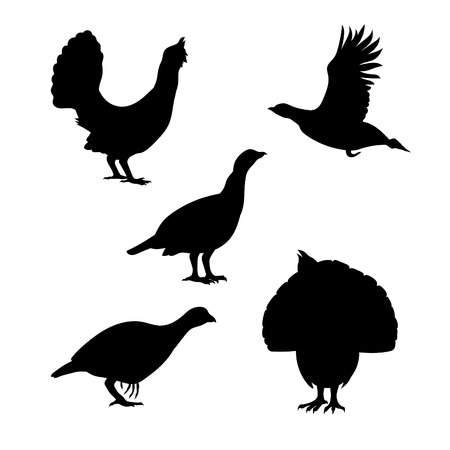 Capercaillie iconen en silhouetten. Set van illustraties in verschillende posities. Stock Illustratie