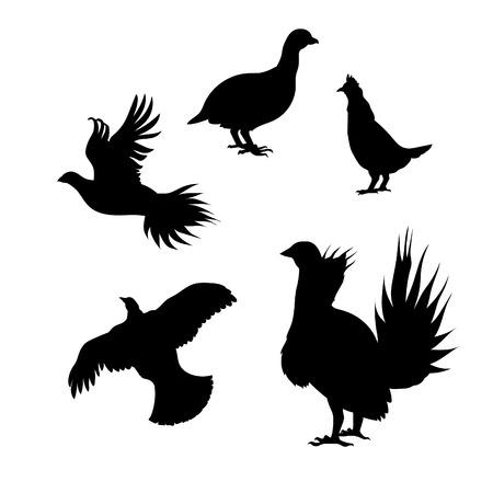 Korhoenders pictogrammen en silhouetten. Set van illustraties in verschillende poses.