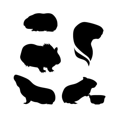 cerdo caricatura: Guinea iconos de cerdo y siluetas. Conjunto de ilustraciones en diferentes poses.