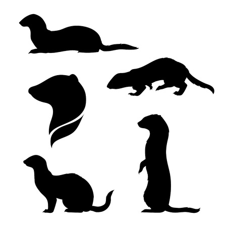 Ferret icons and silhouettes. Set of illustrations in different poses.