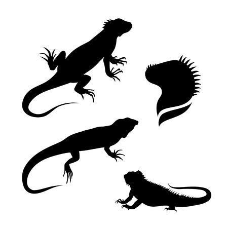 lagartija: Conjunto iguana Lagarto de siluetas vector. Colecci�n de iconos de animales. Ilustraciones en diferentes poses. Vectores