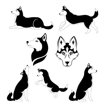 malamute: Husky icons and silhouettes. Set of graphic illustrations in different poses.