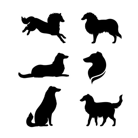 Breed of a dog collie vector icons and silhouettes. Set of illustrations in different poses. Illustration