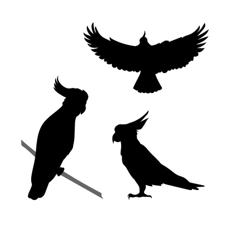 cockatoo: Cockatoo bird vector icons and silhouettes. Set of illustrations in different poses.