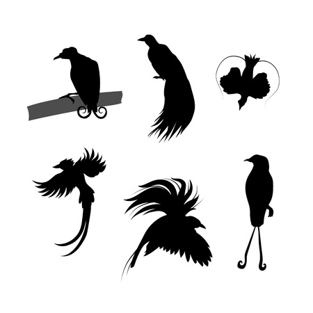 birds of paradise: Birds of paradise vector icons and silhouettes. Little birds illustrations in different poses. Illustration