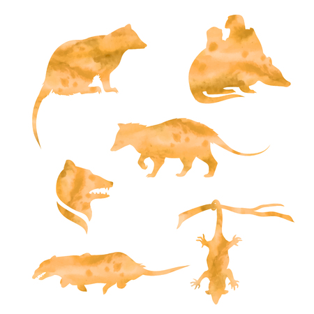 opossum: Opossum vector watercolor icons and patterns. Set of illustrations in different poses.