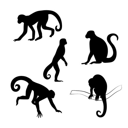 Capuchin monkey vector icons and silhouettes. Set of illustrations in different poses.  イラスト・ベクター素材