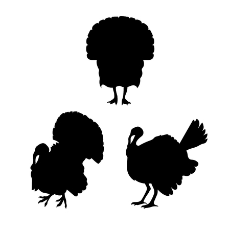 gobbler: Turkey vector icons and silhouettes. Set of illustrations in different poses.