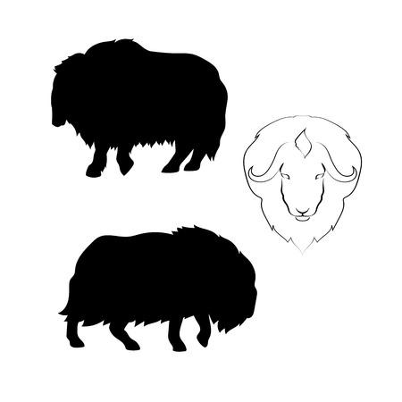 buey: Buey almizclero iconos vectoriales y siluetas. Conjunto de ilustraciones en diferentes poses. Vectores