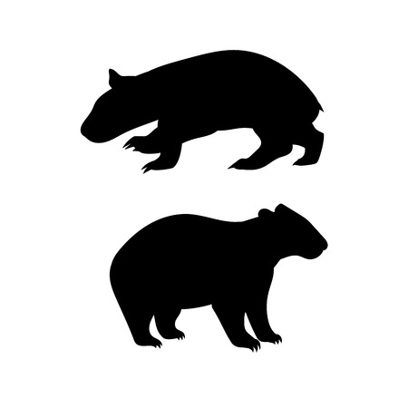 wild animal: Wombat vector icons and silhouettes. Set of illustrations in different poses.