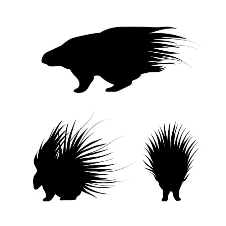 Porcupine vector icons and silhouettes. Set of illustrations in different poses.
