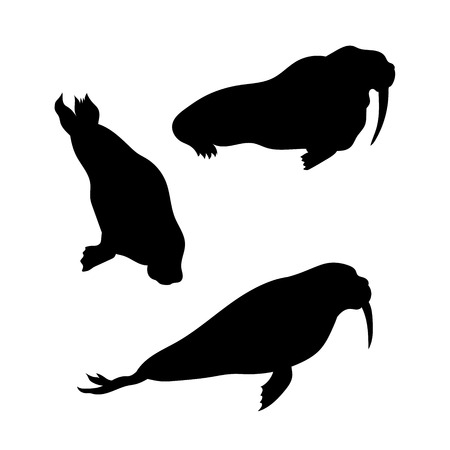 sea cow: Walrus vector icons and silhouettes. Set of illustrations in different poses. Illustration