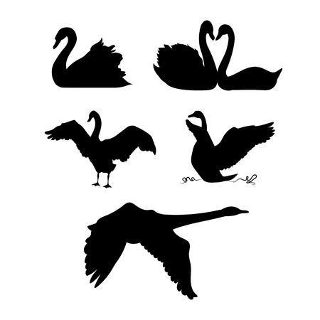 cisnes: Cisne iconos vectoriales y siluetas. Conjunto de ilustraciones en diferentes poses. Vectores