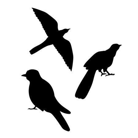 Cuckoo bird icons and silhouettes. Set of illustrations in different poses.