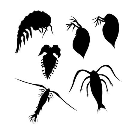 plankton: Plancton iconos vectoriales y siluetas. Conjunto de ilustraciones en diferentes poses. Vectores