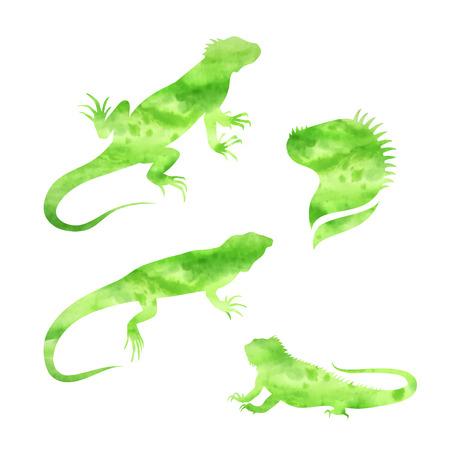 lagartija: Vector conjunto de acuarela lagarto iguana de las siluetas vectorial. Colecci�n de iconos de animales. Ilustraciones en diferentes poses.
