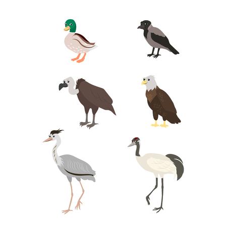 buzzard: Vector cartoon birds: duck crow buzzard eagle crane heron. The drawn set of wild birds. Collection of stylized animals in a flat style.