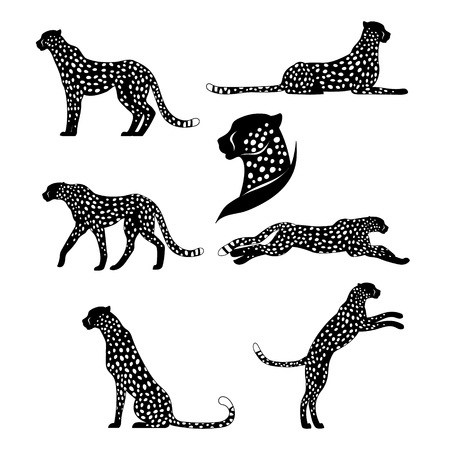 cheetahs: Set of vector graphic cheetahs. Spotted wild cats for your design.