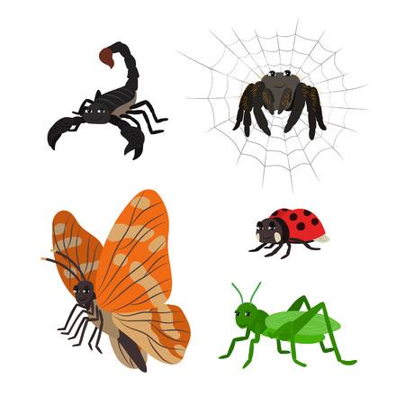 catarina caricatura: Animales de dibujos animados vector escorpión araña mariquita mariposa saltamontes. El trazado conjunto de insectos. Colección de animales estilizados en un estilo plano.