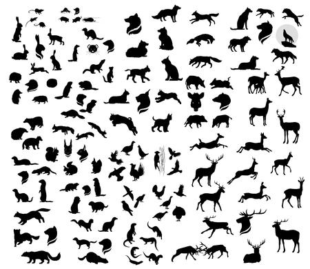 gronostaj: Duży zestaw wektor sylwetki zwierząt leśnych. Duża kolekcja dzikich zwierząt.