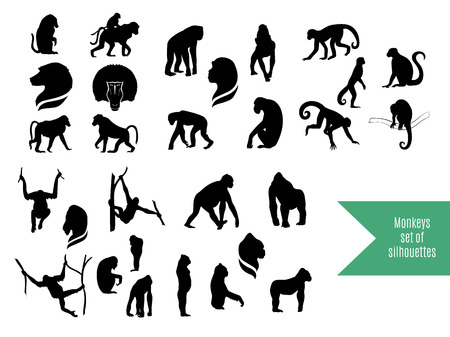 face silhouette: The big vector set of wild monkeys silhouettes. The big collection of wild animals.