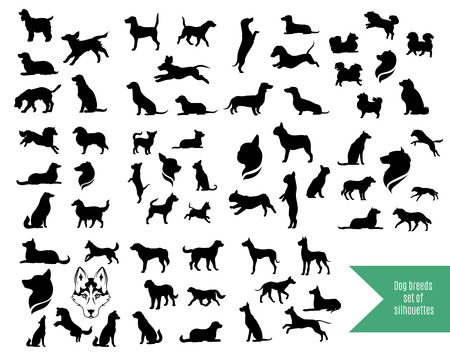 white dog: The big vector set of dog breeds silhouettes and icons.