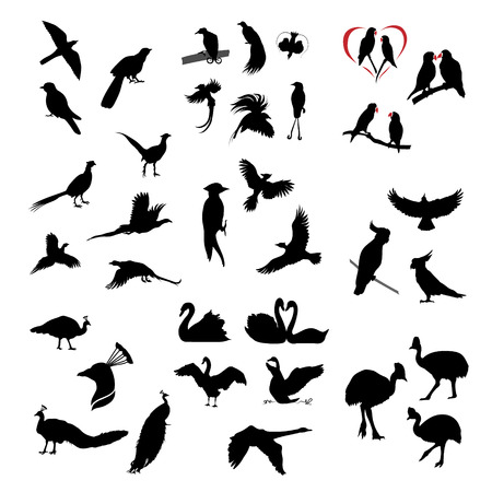 black and white image drawing: The big set of vector wild birds silhouettes and icons. Illustations of flying birds. Illustration