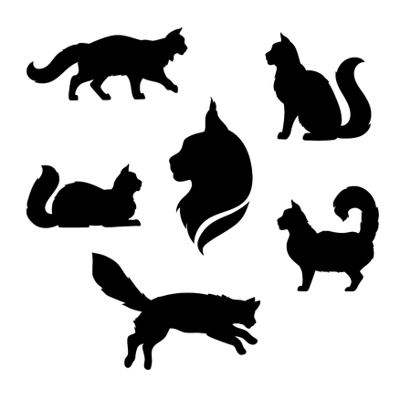 Maine Coon cat icons and silhouettes. Jumping running sitting lying standing going cat. Set of vector black and white pets. Animals outlines. Tattoo art. Isolated fluffy kitten. Cat posing. Illustration