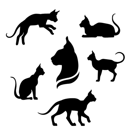 set going: Sphynx cat icons and silhouettes. Jumping running sitting lying standing going cat. Set of vector black and white pets. Animals outlines. Tattoo art. Isolated thin kitten. Cat posing.