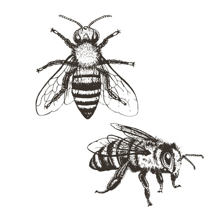 Bee vintage set. Brown and white graphic doodle design. Vector illustration.