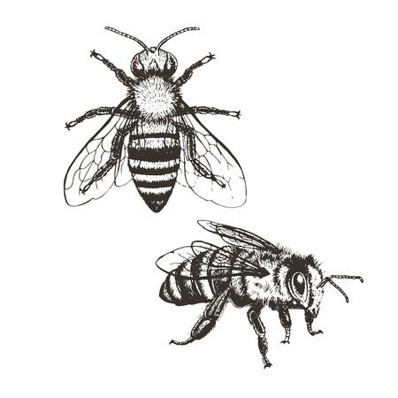 vintage set Bee. Marrone e bianco disegno doodle grafica. Illustrazione vettoriale.