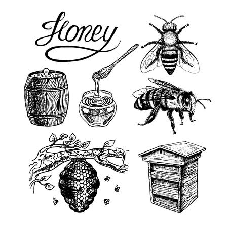 Honey vintage set with bee beehive, glass jar and spoon, barrel, label, lettering, tree branch. Black and white graphic doodle design. Vector illustration. Ilustração