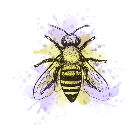 Bee vintage watercolor image. Graphic aquarelle blot, doodle design. Vector illustration.