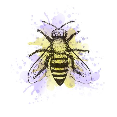 aquarelle: Bee vintage watercolor image. Graphic aquarelle blot, doodle design. Vector illustration.