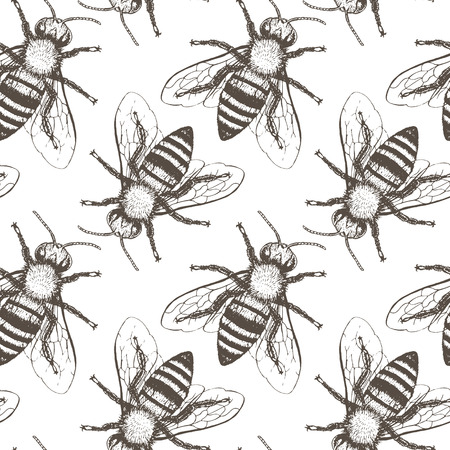 mead: Bees seamless vector pattern. Hand drawn vintage graphic doodle design. Vector illustration. Endless background. Illustration