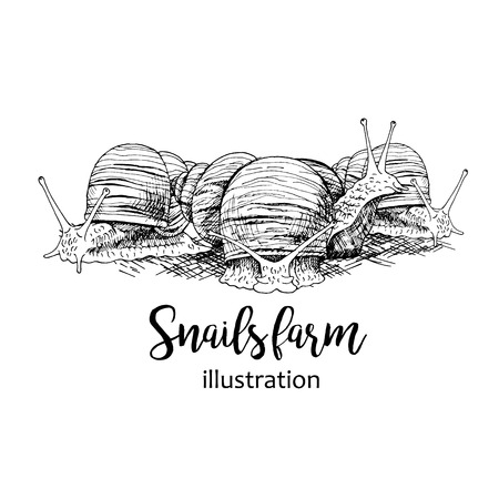 mollusc: Hand drawn set of snails with lettering. Black and white vector sketch. Image for for snails farm. Doodle line illustration with animals. Illustration