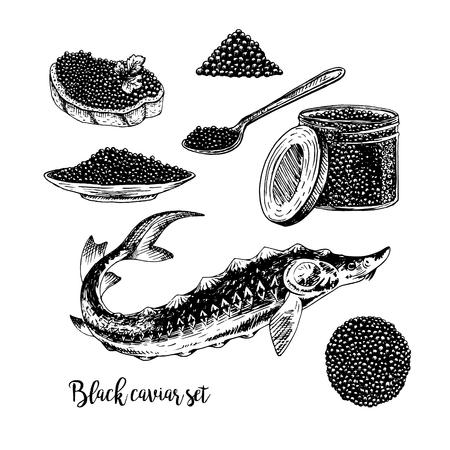 dibujado a mano conjunto de caviar negro. bocetos retro aislado. hypster colección de la vendimia. Doodle línea de diseño gráfico. peces dibujo sándwich de placa tarro de la cuchara de esturión blanco y negro. Ilustración del vector.