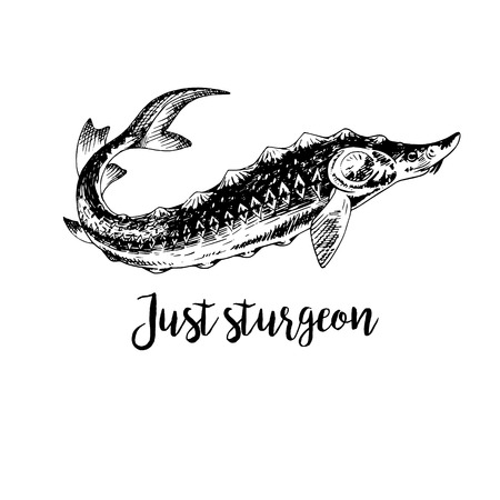 Hand drawn sturgeon. Retro sketches isolated. Vintage hypster collection. Doodle line graphic design. Black and white drawing fish sturgeon. Vector illustration.
