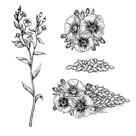 Hand drawn flax flowers and seeds. Pattern in vintage style. Black and white retro bouquet. Drawing line sketch. Can be used in package design. Vector illustration.
