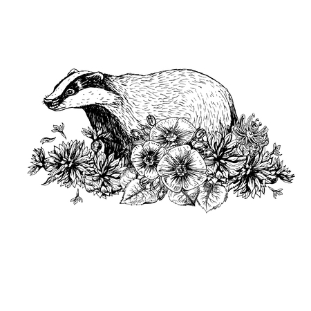 Hand drawn badger with flowers. Vintage style. Print for t-shirt. Tattoo design. Retro sketch isolated. Doodle linear graphic design. Black and white drawing wild animal. Vector illustration. Ilustracja