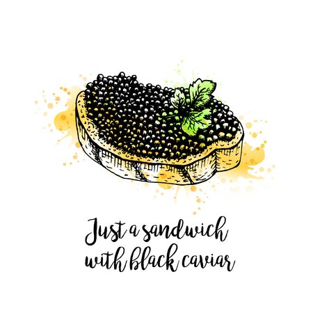 Watercolor Hand drawn sandwich with black caviar. Retro sketches isolated. Vintage collection. Doodle line graphic design. Black and white drawing sandwich with black caviar. Vector illustration.