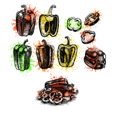 Watercolor Hand drawn set of bell pepper. Retro sketches isolated. Vintage collection. Linear graphic design. Black and white image of farm vegetables. Vector illustration.