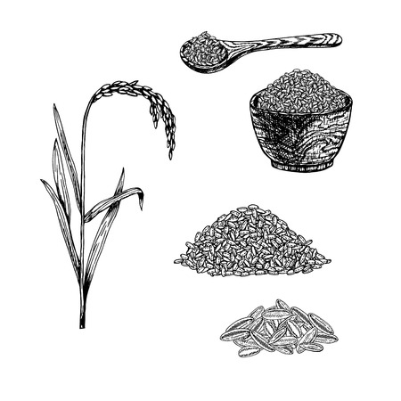 Hand drawn set of rice. Retro sketches isolated. Vintage collection. Linear graphic design. Black and white spoon and plate with rice. Plant rice. Vector illustration. Vectores