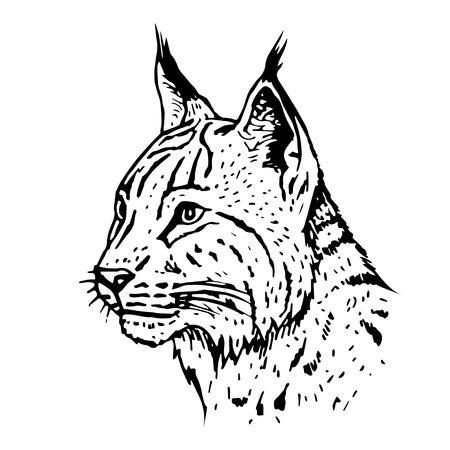 Hand drawn lynx head. Vector illustration.